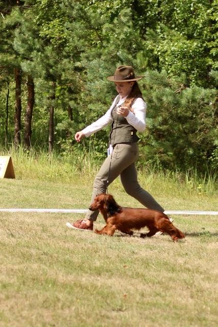 V lotyšsku se bojuje především o titul CAC - nejelpší pes fena v plemeni -  všichni psi 251e1a0542